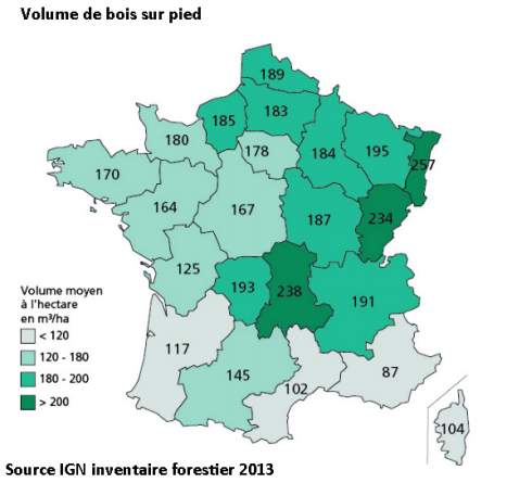 Bois sur pied France inventaire forestier IGN 2013